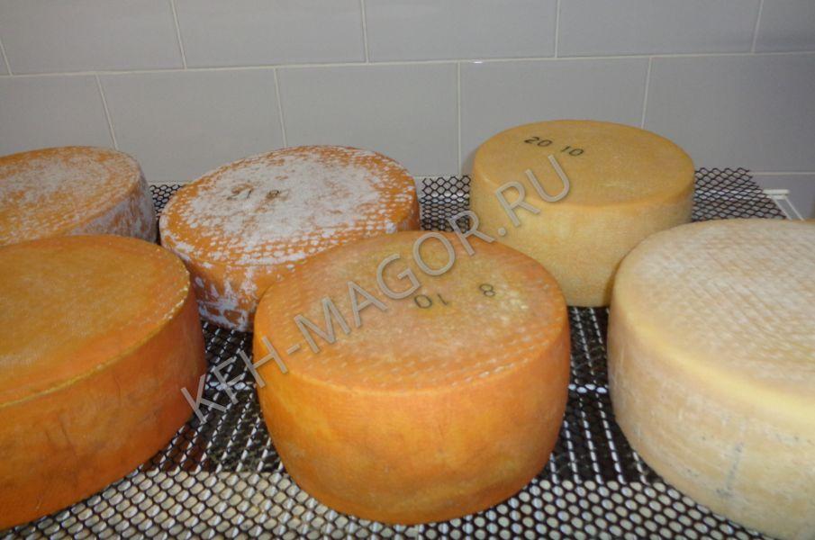 Купить твердый сыр от фермера