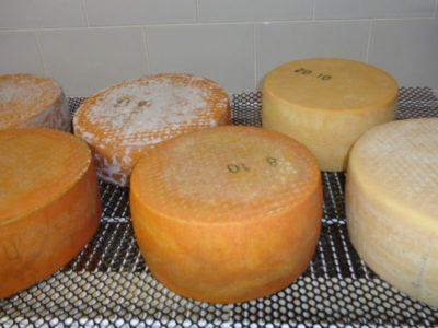 Фермерский твердый сыр